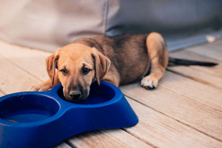 Small and beautiful puppy lays next to empty feed bowl and looks sad Stok Fotoğraf