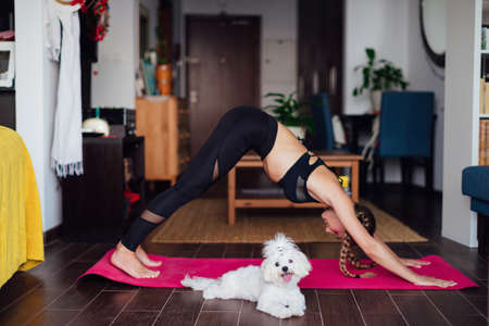 Beautiful woman doing exercise, practicing yoga, cute white puppy sits next to her owner, sporty girl wearing black sportswear working out indoors, blond woman stands in downward facing dog yoga pose Stok Fotoğraf