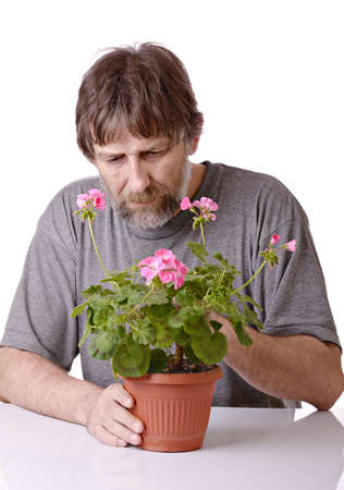 elderly man caring for a potted flower in a pot isolated on white background photo