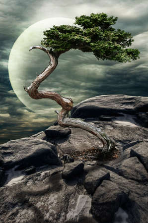 implausible: tree grown in the conditions of the oppressed among the lifeless stones (concept: the struggle for life) Stock Photo