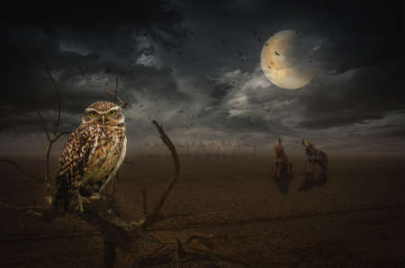 steppe: owl on a dead branch in a night steppe, (illustration of a fictional situation, in the form collage of photos)