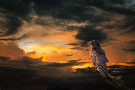 situation: background, Raven on stormy sunset. (illustration of a fictional situation, in the form collage of photos) Stock Photo