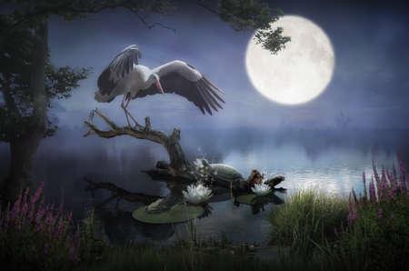 Crane night dance in the swamp.