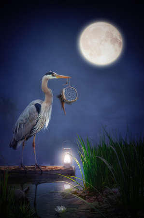 fairy heron on an old pond at night