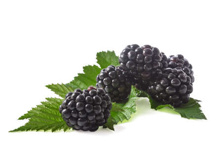 blackberries with leaves on a white background (blank for your photo manipulations / collages) Standard-Bild