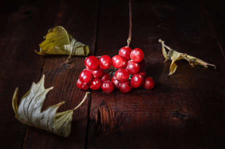 bunch of viburnum among dry leaves on a dark wooden background. Autumn style. Standard-Bild