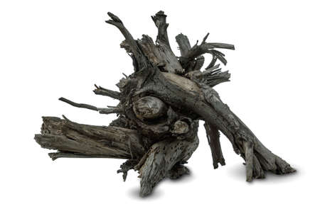 driftwood on a white background (blank for your photo manipulations / collages)