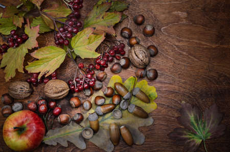 branch of viburnum dry leaves and apples on a dark wooden background. Autumn style.