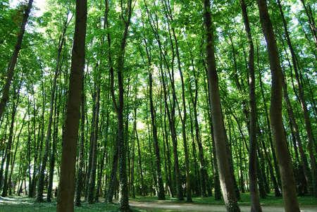 sun lit: Sun lit trees in Saint Denis park, Paris, France