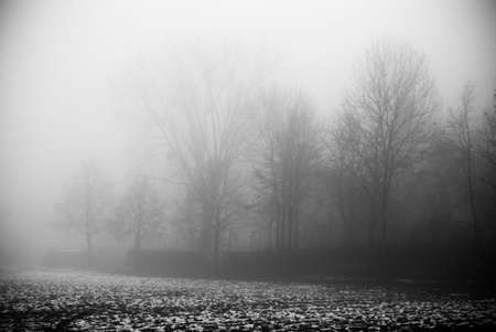 The fog and dark spooky forest photo