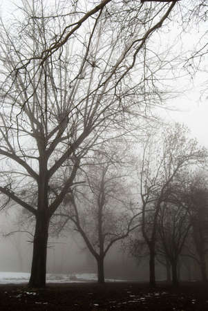 Creepy dark forest and the fog photo
