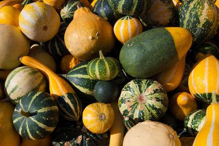Pumpkin bale - pile of yellow, green and striped pumpkins photo