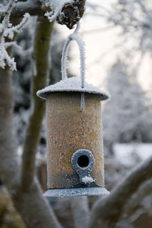 Frozen Bird Feeder