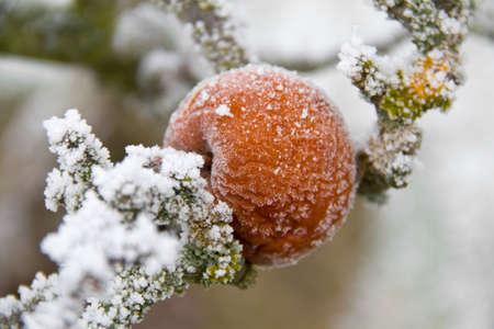 Frozen Apple Stock Photo