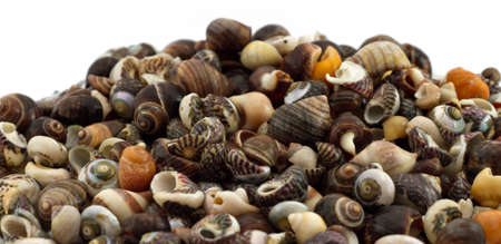 Small mixed seashells on white Stock Photo