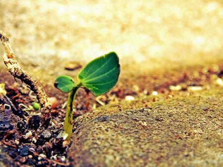 weed block: a plant growing between paving blocks
