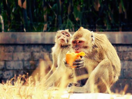 stingy: stinggy monkey do not share manggo to his friend
