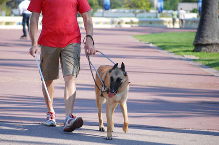Guide dog for the blind.