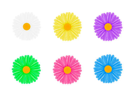 Chamomile.The flowers are multicolored. vector illustration on white background. Illustration