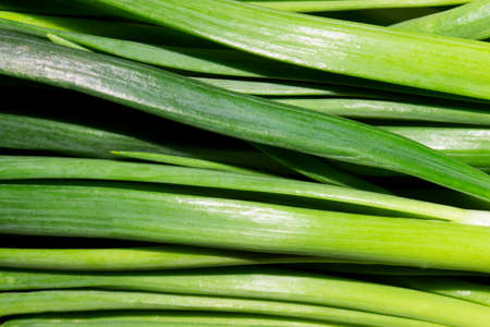 Background of green onion feathers.