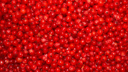The berries of the red currant. Reklamní fotografie