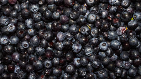 The texture of the blueberries.