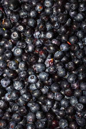 Blueberry background.Forest blueberries.