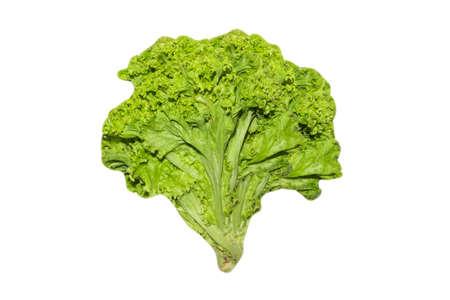 Leaf salad isolated on white background.