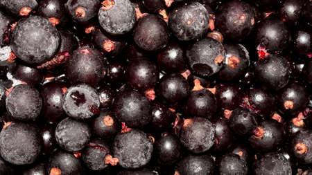Frozen black currants. Background of black currant berries.