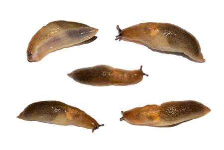 Slug isolated on a white background. Set of slugs on a white background.