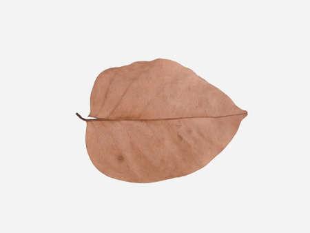 dispirited: dry leaf