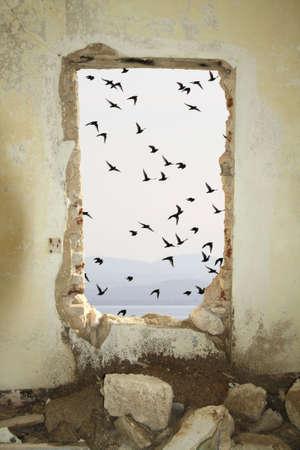 passage: Window facing the sea and passage of birds