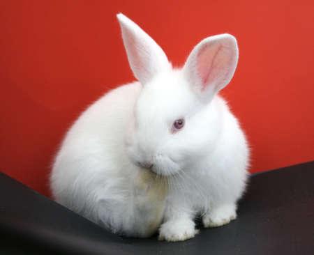 bunny ears: Smart rabbit