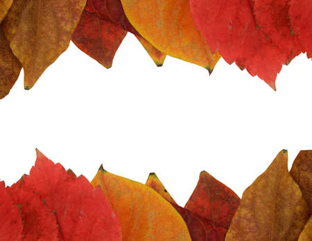 Frame of red and yellow leaves Stock Photo - 8624229
