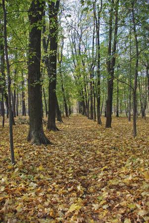 Autumn park Stock Photo - 4895045