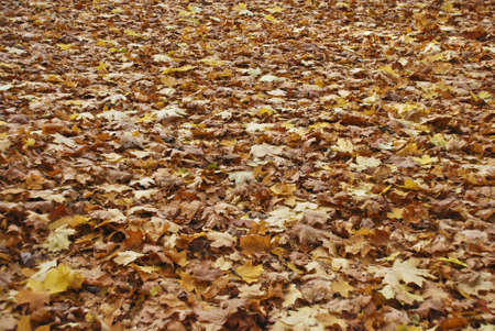 Autumn park Stock Photo - 4895049
