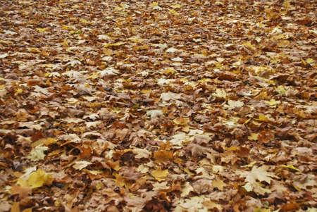 Autumn park Stock Photo - 4895049