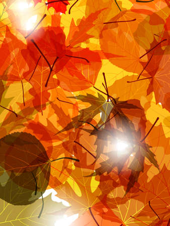 saturated: Light through autumn leaves.