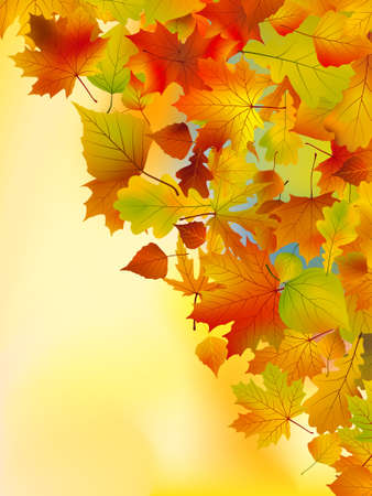 Autumn leaves background.  Stock Vector - 7781571