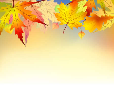 Colorful autumn leaves background.  Stock Vector - 7781578