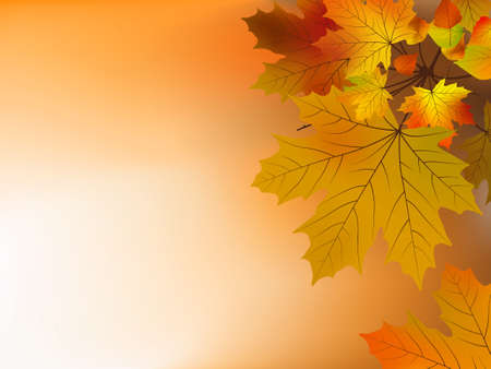 Autumn leaves, soft shallow focus.  Vector