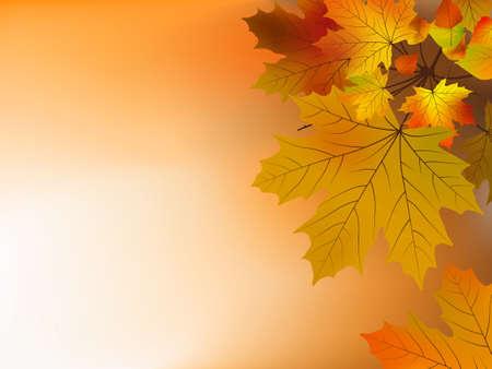 Autumn leaves, soft shallow focus. Stock Vector - 7805845