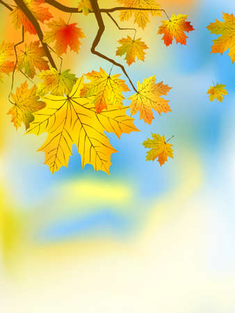 Autumn leaves background in a sunny day. Stock Vector - 7805848