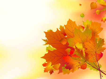 Autumn leaves, shallow focus.   Vector