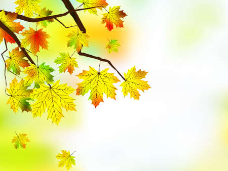 Autumn leaves, very shallow focus on white background. Stock Vector - 7817014