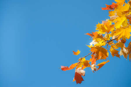 Autumn leaves and sun, very shallow focus. photo