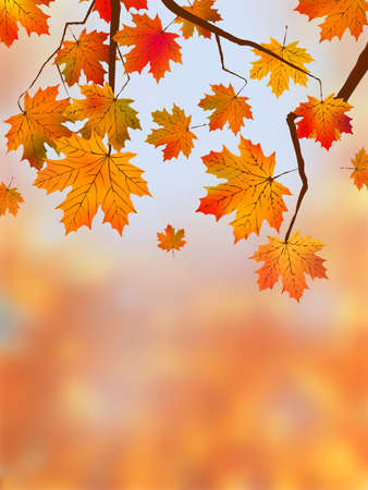 highly detailed image of autumn leaves very shallow focus photo