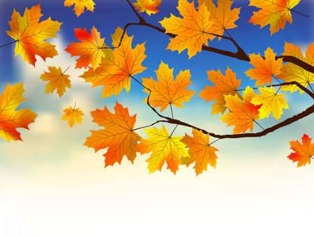 Fall leaves in front of blue sky with clouds. photo