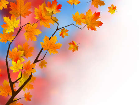 Red maple leaves as a background or concept. photo
