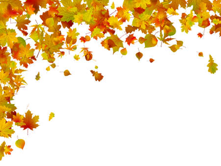 Background of autumn leaves.  Stock Vector - 8659327